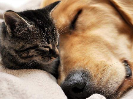 cani-gatti cremati piccola