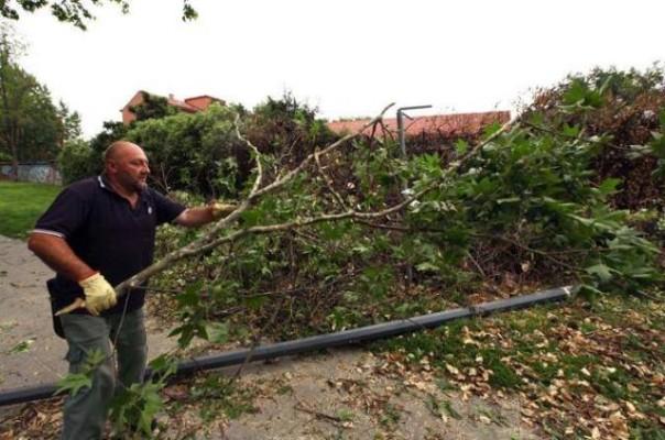 Maltempo, alberi sradicati in Toscana