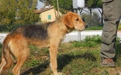 La maggior parte dei 72 cani custoditi nel canile di Pratolino sono stati restituiti ai proprietari