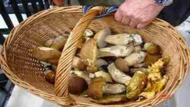 Toscana, 35 intossicazioni da funghi dal 22 ottobre