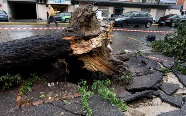 Il forte vento in Toscana ha sradicato e abbattuto numerosi alberi