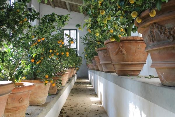 Firenze apre la limonaia del giardino di boboli
