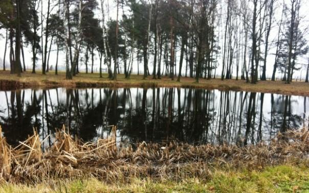 Birkenau, lo stagno dove venivano gettate le ceneri dei corpi cremati dei deportati