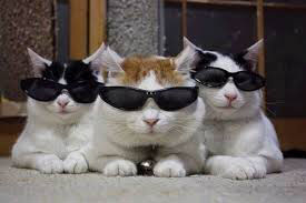 gatti con gli occhiali