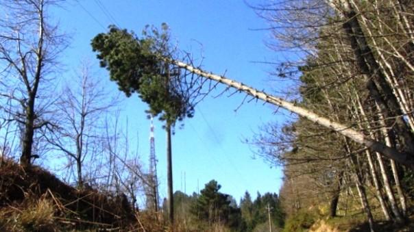 Toscana, innumerevoli gli alberi crollati a causa della tempesta di vento