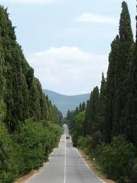 I cipressi di Bolgheri, cantati dal Carducci