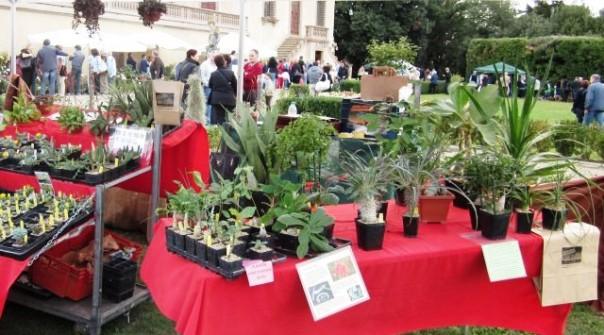 Botanica, a Villa Caruso la rassegna di piante e fiori da tutto il mondo