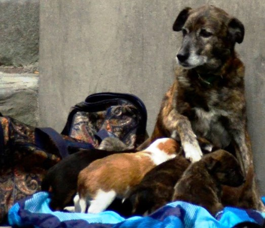 Pistoia, elemosina con i cuccioli venduti a pochi euro