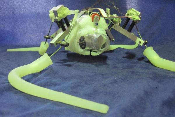 Un «polpo robot»