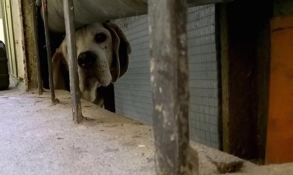 Il cane incastrato nel cunicolo è stato salvato dai pompieri (Foto Vigili del Fuoco)