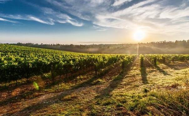 A Contemporary Wine, rassegna del vino d'eccellenza