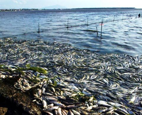 La morìa di pesci nella laguna di Orbetello