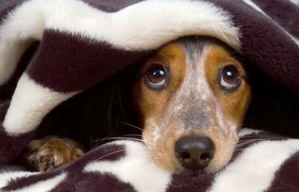 Botti di Capodanno, i cani hanno paura