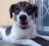 La canina Lorenza: aspetta una famiglia che la possa adottare