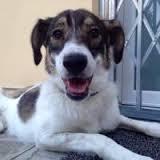La canina Lorenza