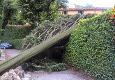 Grossi alberi abbattuti dal temporale a Fiesole. Un ferito