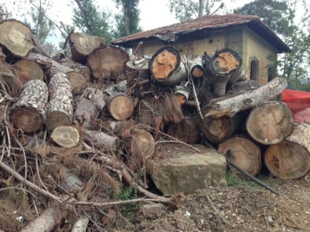 Maltempo: Anconella Firenze
