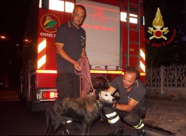Cane salvato da vigili fuoco