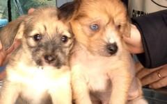 Scandicci, quindici cuccioli in cerca di un padrone