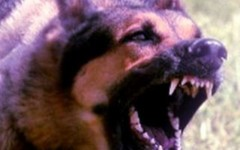 Firenze: azzannato da pastore tedesco finisce in ospedale. Difendeva il suo cagnolino