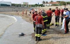 Il ritrovamento dei resti di cadavere sulla spiaggia di Livorno