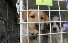 Firenze, da giugno nel canile di Pratolino custoditi 72 cani