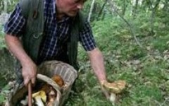 Per cercare e raccogliere i funghi servono cognizioni per evitare gravi intossicazioni