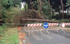 Maltempo, in Toscana raffiche di vento a 120 km orari