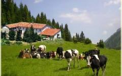 Ventimila agriturismi in Italia, +150% dal '98