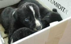 Acquistano cani in Bulgaria per rivenderli online