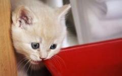Gattino sbranato da due cani, multa di 50 euro