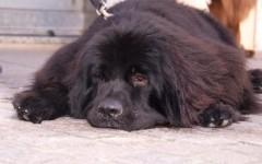 Sconto sulla Tares a chi adotta un cane