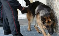 Cani antidroga a scuola. L'allarme dato dal preside