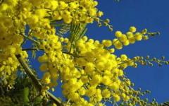 8 marzo, per le donne non è solo profumo di mimosa
