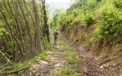 Gli uomini della Forestale nel bosco devastato a Firenzuola