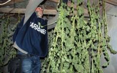 Mugello, scoperto un «laboratorio» per la produzione di marijuana