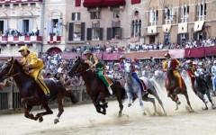 Siena, Palio: abbattuta Periclea, cavalla di 7 anni, infortunata durante una batteria