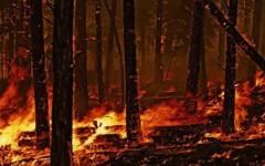 Estate, tempo d'incendi nei boschi. Dalla Forestale le regole base della prevenzione fai da te (VIDEO)