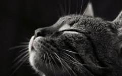 gatto di profilo