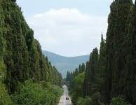 Maltempo, Toscana: dopo i cipressi del Carducci, a Bolgheri, sradicato a Barga il cipresso piantato da Giovanni Pascoli