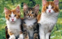 Pistoia, animali torturati: trovati uccisi tre gatti nell'area dell'ex ospedale del Ceppo