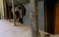 Firenze, cane incastrato in un cunicolo messo in salvo dai Vigili del Fuoco (Video)