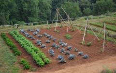 Caldo: orti, giardini, terrazzi, 20 milioni di italiani a coltivare. Un tutor spiega come
