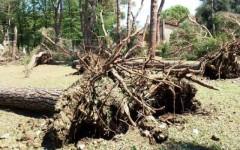 Firenze, nubifragio: a San Salvi alberi secolari spazzati via
