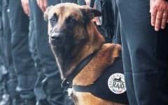 Parigi, Hollande: guerra all'Isis. I terroristi preparavano nuovi attacchi. Morto il cane poliziotto Diesel, eroe del web
