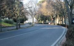 Firenze: 300 nuovi alberi. Intervento da 450mila euro