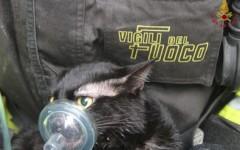 Firenze: incendio in una casa, salvati una donna e due carabinieri. Un gatto rianimato con l'ossigeno (video)
