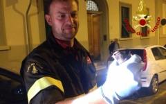 Firenze: rondine liberata dai vigili del fuoco in via Fonseca Pimentel