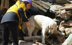Terremoto: i cani da macerie salvano 60 persone, estratte vive dalle case crollate