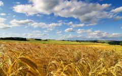 Economia: Agricoltura in ginocchio per la deflazione, grano (-42%) e latte (-24%) i prodotti più colpiti